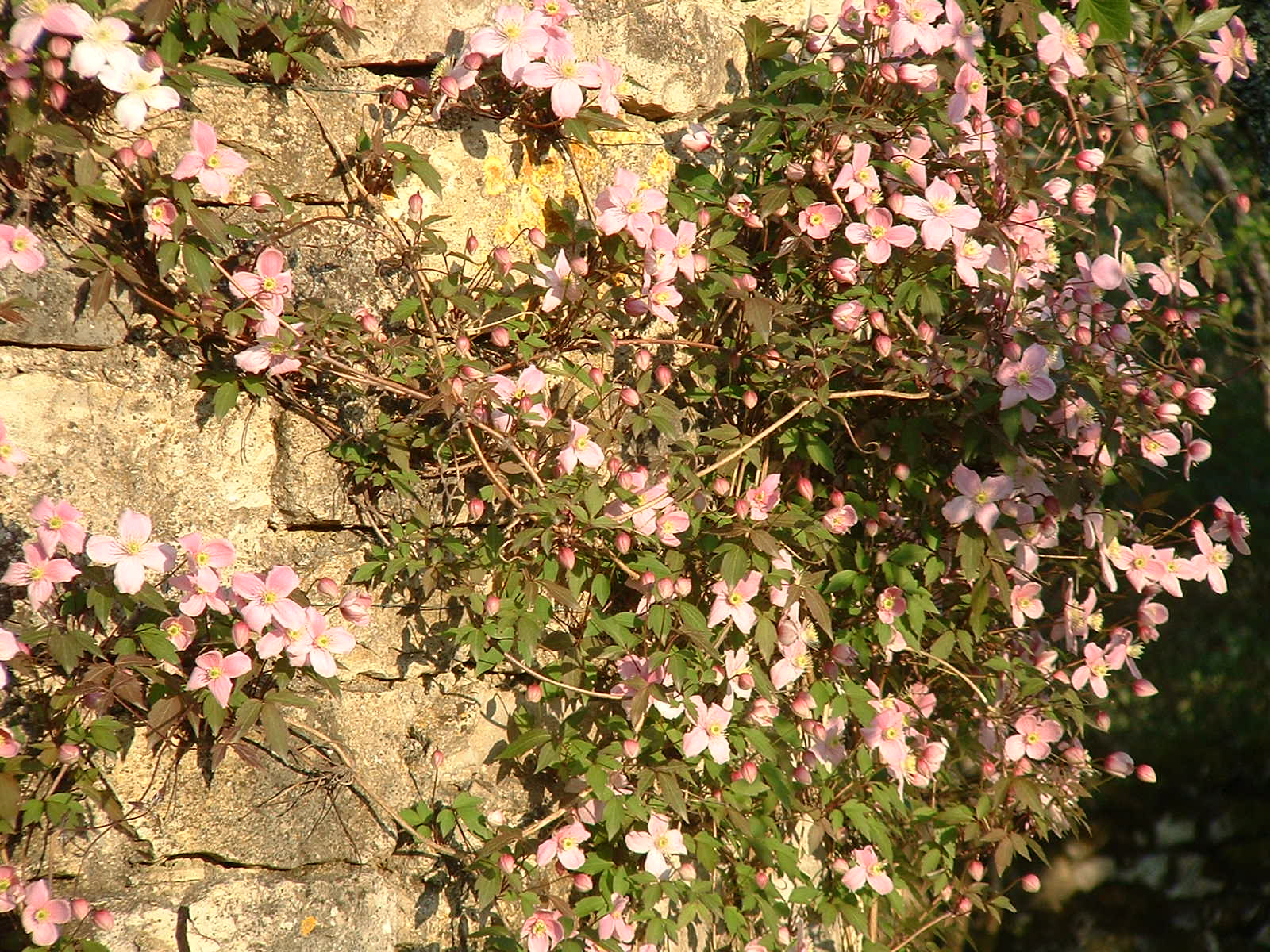 How to garden in France: which plants do well? | Life on La Lune