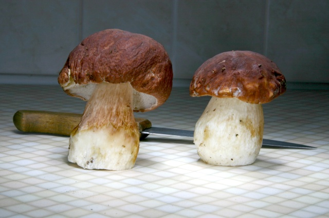 mushrooms in the kitchen - PhotoXpress