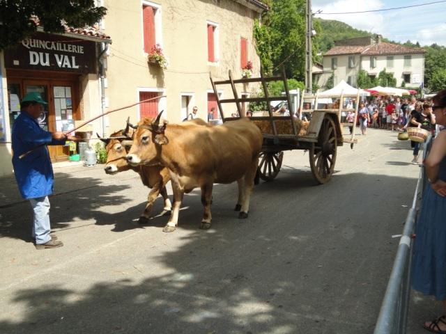 Saint-Antonin Oxen