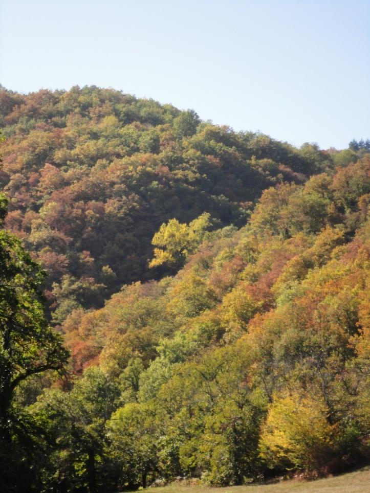 Viaur autumn colours 2