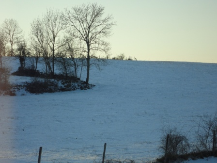 Wintry view behind our house