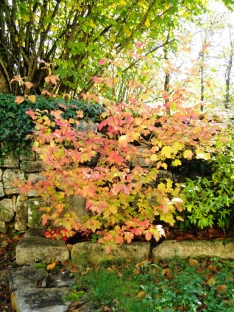 November colours - time to plant?