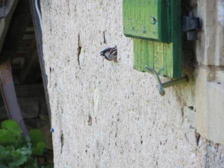 Co-resident sparrow