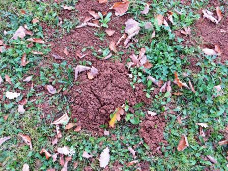 Moles' depredations