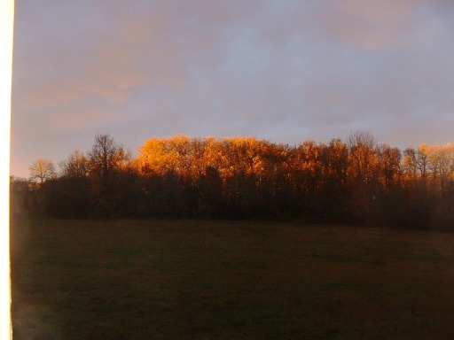 November evening sun on oak wood