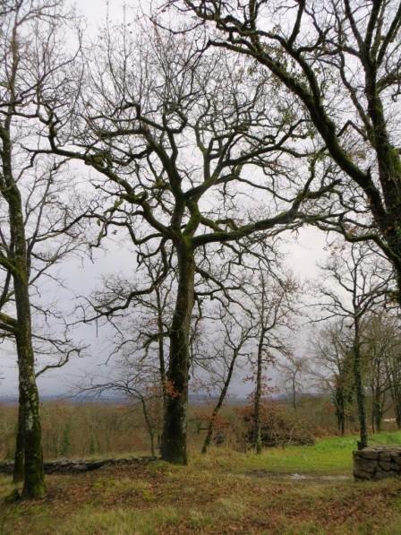My favourite oak