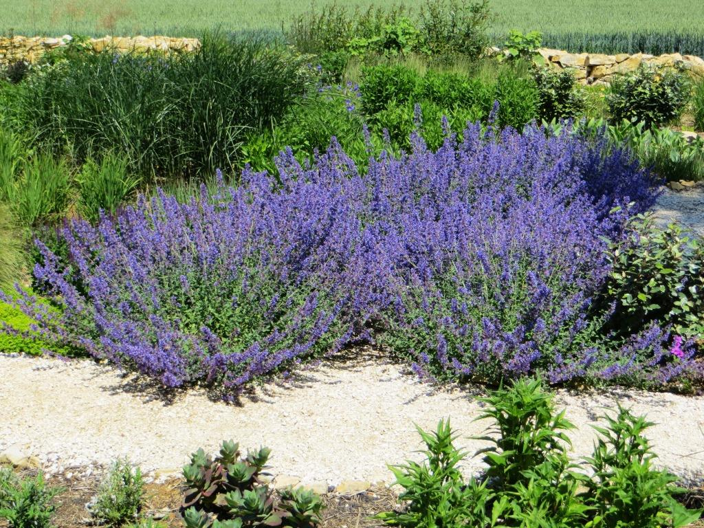 Gardens And Sw France Weather May 2014 Life On La Lune
