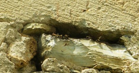 Bees colonising a hole in the church wall