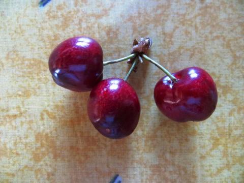 Succulent ripe cherries