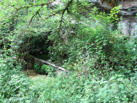 Ruined lavoir hidden in the woods