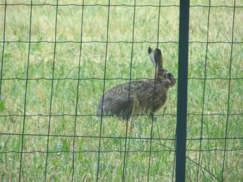 Hare caught in a rare moment of stillness