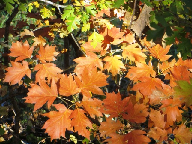 Autumn colours 10-15 1