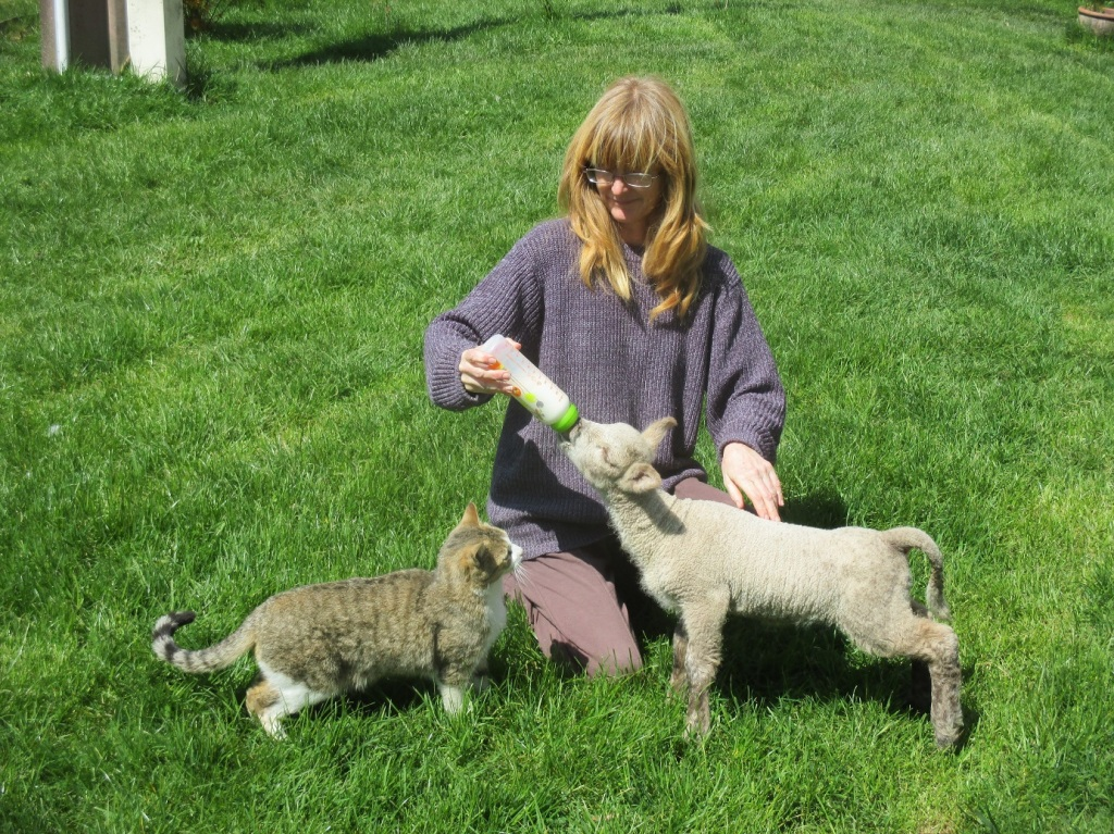 Stephanie Dagg with one of her many animals