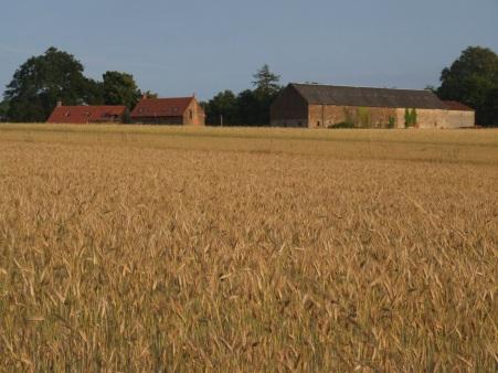 Houses and barn