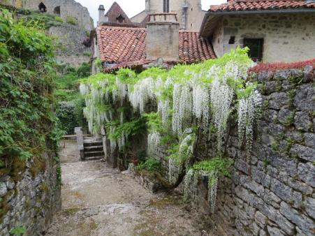 Wisteria-clad wall in Saint-Cirq