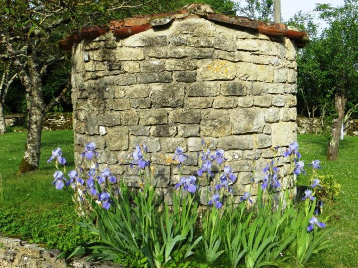 Irises in front of well May 2015
