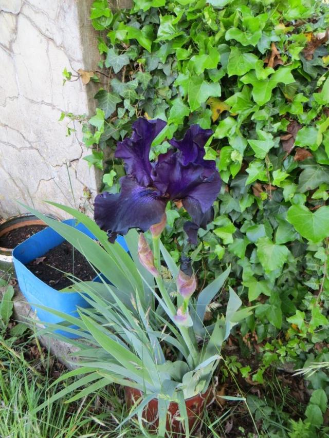 Caylus - wild flowers 2