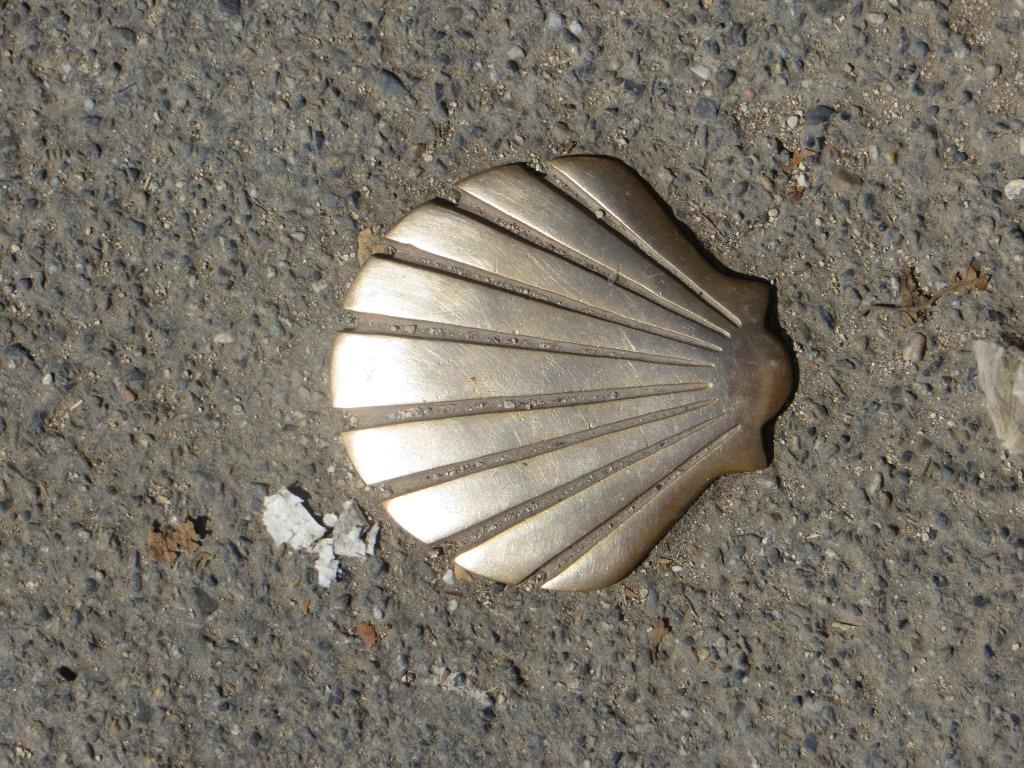 Cahors - scallop