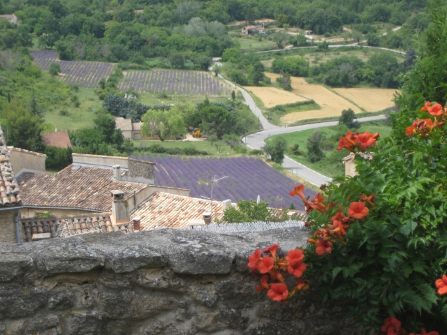 Lavender fields from Saignon, near Apt (Luberon)