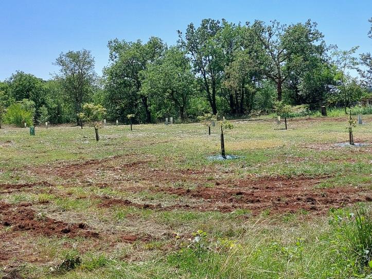 Truffle plantation Limogne France